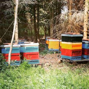 Bienenkaesten Imkerei Carl