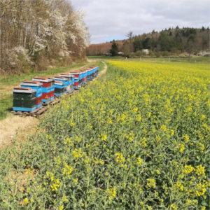 Bienenkaesten Imkerei Carl 1