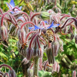 Bienenkaesten Imkerei Carl 4