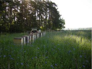 Bienenkaesten im Lavendelfeld Das suesse Leben