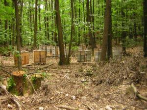 Bienenkaesten im Wald Das suesse Leben