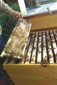 Jagsttalimkerei Bienenwabe