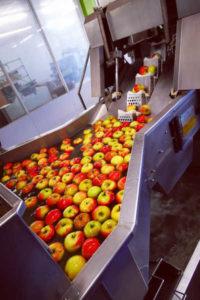 Broeg Trockenfruechte Produktion Apfelchips ganze Aepfel