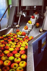 Broeg Trockenfruechte Produktion Apfelchips ganze Aepfel 1