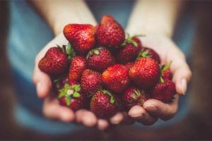 Bachs Hofladen Erdbeeren